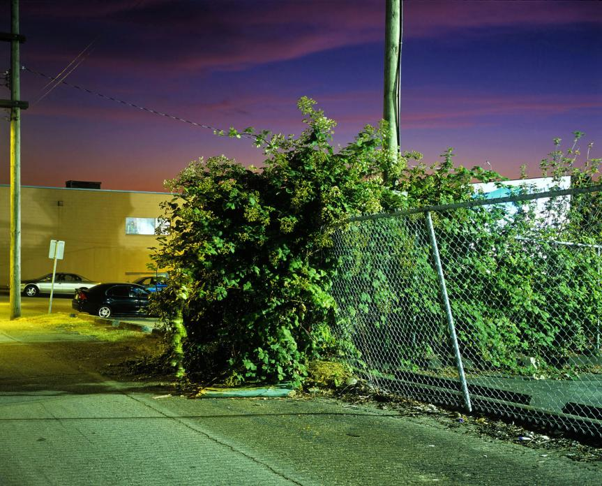 Untitled #23, Bush in Alley, 2012